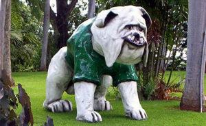 mascota-rum-caam